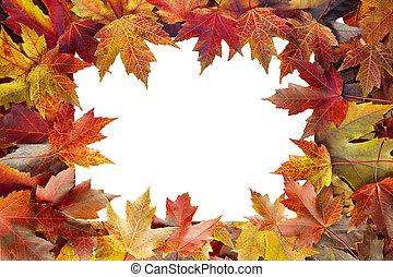 coloridos, folhas, árvore, outono, borda, maple