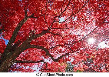 coloridos, folhas