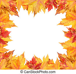 coloridos, folhas, quadro, outono, branca