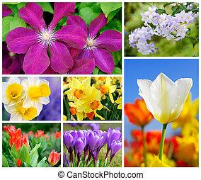 coloridos, jogo, de, 7, flor, tiros