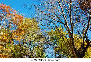 coloridos, outono, árvores
