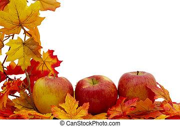 coloridos, outono, borda