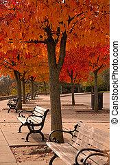 coloridos, outono, dossel