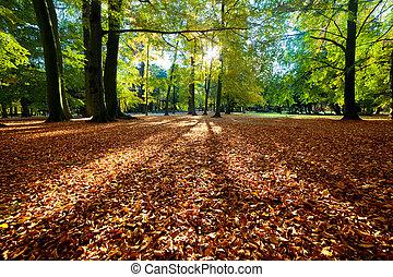 coloridos, outono, outono, parque