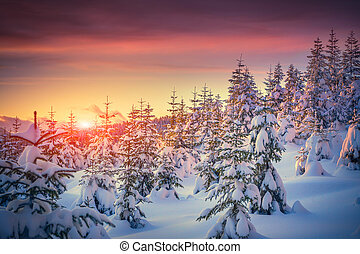 coloridos, paisagem, em, a, inverno, amanhecer, em, a, montanha, floresta