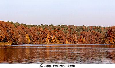 coloridos, red-brown, outono, floresta