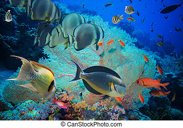 coloridos, submarinas, recife, com, coral, e, esponjas