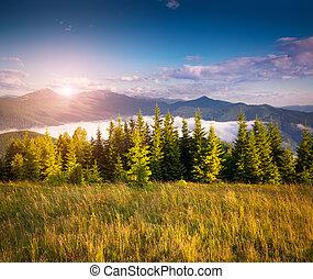coloridos, verão, cena, em, a, carpathian, montanhas