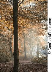 coloridos, vibrante, Outono, impressionante, floresta, outono, nebuloso, paisagem, mal-humorado