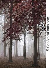 coloridos, vibrante, Outono, impressionante, floresta, outono, nebuloso,  evocative, paisagem