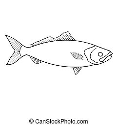 Coloring book for children, dace roach fish
