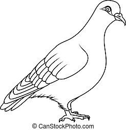Coloring book: pigeon