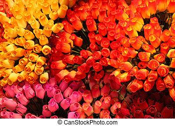 colorito, mazzolino, rosa, vendita, legno, stare in piedi