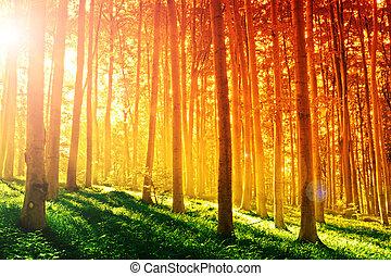 colorito, mistico, foresta, con, raggio sole, a, mattina