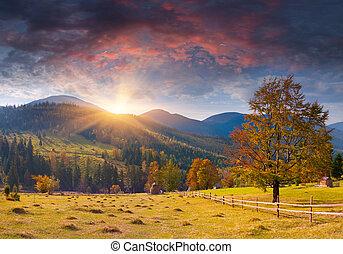 colorito, paesaggio autunno, in, il, montagne., alba
