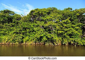 colorito, sole, albero, luminoso, verde, banche, fiume