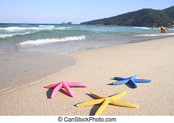 colorito, starfish, spiaggia, a, estate