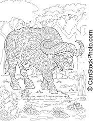 coloritura, bufalo, pagina