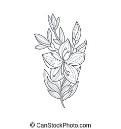coloritura, gelsomino, libro, fiore, monocromatico, disegno