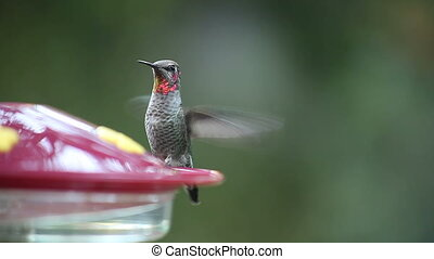 colors of a ruby-throated hummingbi