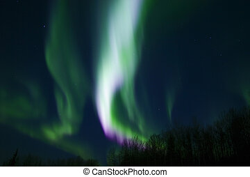 Colors of northern lights (aurora borealis) over trees