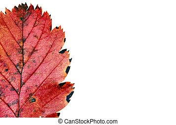 colors of autumn #11
