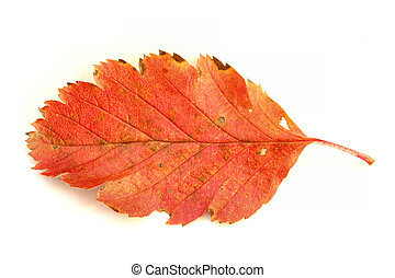 colors of autumn #4