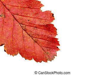 colors of autumn #6