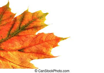 colors of autumn #8