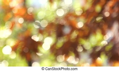 Colors of autumn, blurred leaves.