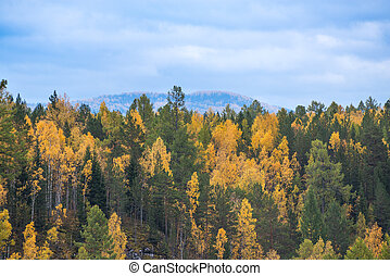 Colors of autumn forest