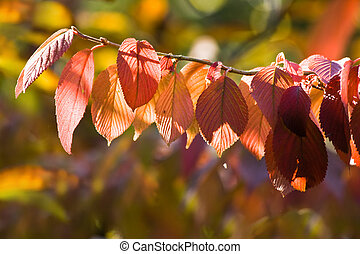 colors of autumn on sunny day