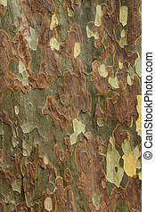 Colors Of Bark