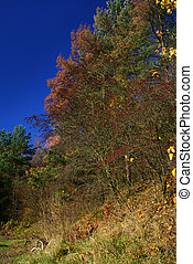 colors of fall #2