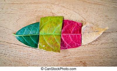 colors of Leaf