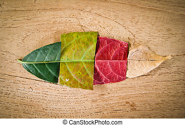 colors of Leaf