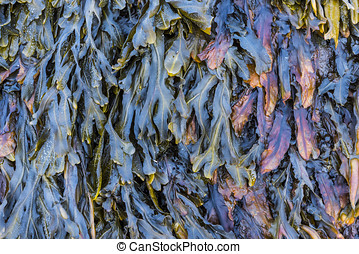 Colors of Seaweed