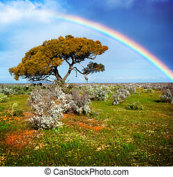 Colors of the Rainbow - Rainbow over a lone tree