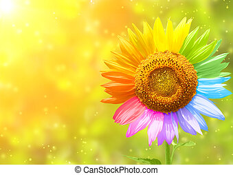Petals of a sunflower painted in different colors