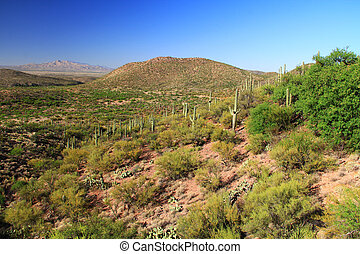 Colossal Cave Mountain Park View - Desert mountain view as...