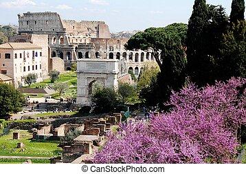 colosseum, romano, foro, forum), (roman