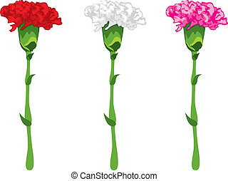 Coloured carnations - Flowers carnations, pink, red and...