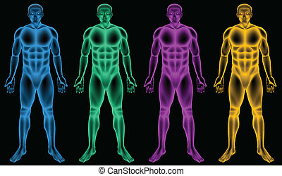 Coloured male bodies - Illustration of the coloured male ...