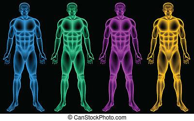 Coloured male bodies