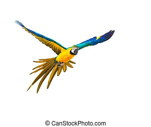 colourful, летающий, попугай, isolated, на, белый
