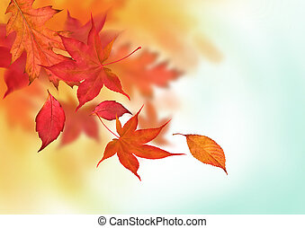 Colourful Autumn Falls - Autumn leaves in golden ambers and...