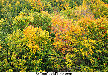 Colourful autumn forest trees