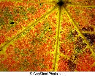 Colourful autumn leaf