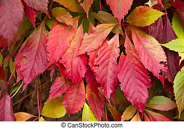 Colourful autumn leafs
