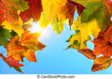 Colourful autumn leaves and the sun in the blue sky